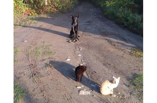 Начальный курс дрессировки собак - Дрессировка, передержка в Кореновске