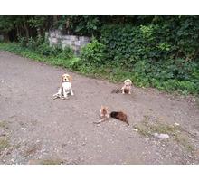 Воспитание, дрессировка собак,курс послушания для щенков с 3 месяцев - Дрессировка, передержка в Тимашевске