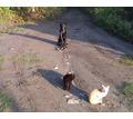 дрессировка собак,курс послушания для щенков.охрана хозяина. - Дрессировка, передержка в Краснодарском Крае