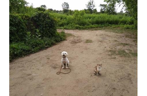 Корректировка поведения у взрослых собак, начальный курс дрессировки для щенков с 3 месяцев - Дрессировка, передержка в Усть-Лабинске