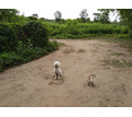 Корректировка поведения у взрослых собак, начальный курс дрессировки для щенков с 3 месяцев - Дрессировка, передержка в Краснодарском Крае