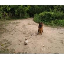Дрессировка собак! Опытные кинологи помогут вам подобрать и обучить вашего питомца! - Дрессировка, передержка в Хадыженске