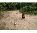 Дрессировка собак! Опытные кинологи помогут вам подобрать и обучить вашего питомца! - Дрессировка, передержка в Краснодарском Крае
