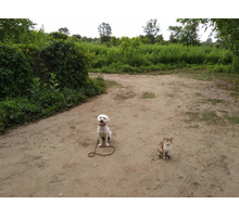 Воспитание обучение дрессировка собак с 3 месяцев - Дрессировка, передержка в Курганинске