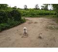 Воспитание обучение дрессировка собак с 3 месяцев - Дрессировка, передержка в Краснодарском Крае