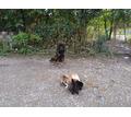 Воспитание обучение дрессировка собак - Дрессировка, передержка в Краснодарском Крае
