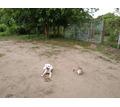 Воспитание , дрессировка собак всех пород с 3 месяцев - Дрессировка, передержка в Краснодарском Крае