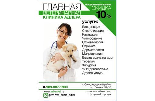 Главная ветеринарная клиника Адлера - Ветеринарные услуги в Адлере