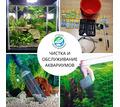 Обслуживание аквариумов высококлассное - Аквариумные рыбки в Краснодаре
