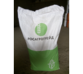 Семена кукурузы краснодарский 291 амв - Саженцы, растения в Тихорецке