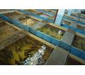 Продается производство- рыбный цех . - Продам в Тимашевске