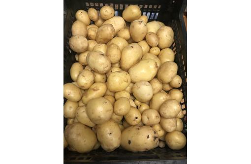 Молодая картошка всего по 150 руб. за кг. - Эко-продукты, фрукты, овощи в Славянске-на-Кубани