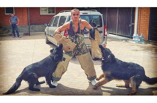 Дрессировка собак Белореченск, фото — «Реклама Белореченска»