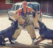 Дрессировка собак Белореченск - Дрессировка, передержка в Белореченске