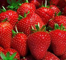 Рабочие на сбор ягод(клубники,малины) - Сельское хозяйство, агробизнес в Новороссийске