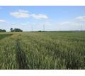 Земельный участок сельхозназначения 6000 Га - Участки в Краснодаре