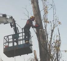 Уход за деревьями - Ландшафтный дизайн в Краснодаре