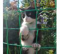 ПРОПАЛ КОТ ВИНСЕНТ - Кошки в Ейске