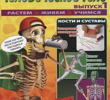 Модель человека, Обучающий набор Артёмка (Собери человеческое тело) - Игрушки в Краснодарском Крае