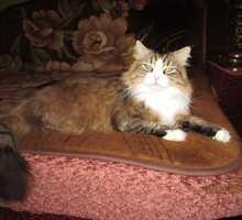 Внимание,поиск - Кошки в Краснодарском Крае