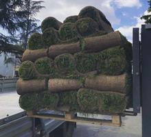 Рулонные газоны Сочи. Красиво и удобно - Саженцы, растения в Сочи