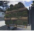 Рулонные газоны Сочи. Красиво и удобно - Саженцы, растения в Краснодарском Крае
