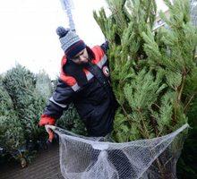 Требуются охранники и реализаторы на торговлю елками на месяц декабрь - Охрана, безопасность в Краснодарском Крае