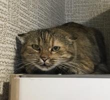 Найдена кошка (или кот) в Новой Адыгее - Кошки в Краснодарском Крае