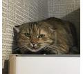Найдена кошка (или кот) в Новой Адыгее - Кошки в Краснодаре