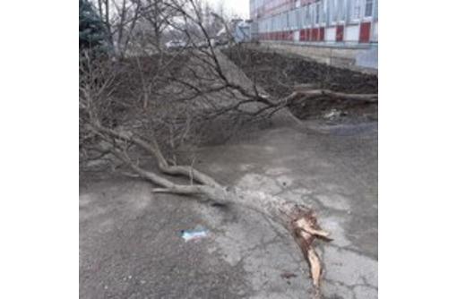 Спил деревьев.Удаление пня.Вывоз Мусора и веток. - Ландшафтный дизайн в Армавире