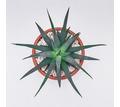 Haworthia fasciata комнатное растение - Саженцы, растения в Краснодаре