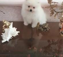 Маленькое чудо - Собаки в Курганинске