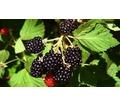 Земельный участок сельхозназначения 32 Га - Участки в Краснодаре