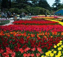 КРЫМ(Парад Тюльпанов) 10-11 Апреля - Отдых, туризм в Краснодарском Крае