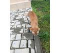 Найдена кошка ФМР - Бюро находок в Краснодаре