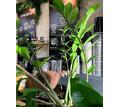 Приглашаем в команду кофеен «LATTE BAR» надежных сотрудников! - Бары / рестораны / общепит в Краснодарском Крае
