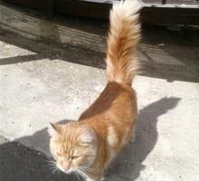 Найден кот - Кошки в Краснодарском Крае