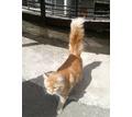 Найден кот - Кошки в Краснодаре