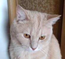 Отдам котика в добрые руки - Кошки в Краснодарском Крае