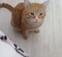 Пропал кот Ричик - Бюро находок в Кропоткине