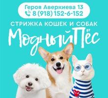 Стрижка кошек и собак - Ателье, обувные мастерские, мелкий ремонт в Краснодарском Крае