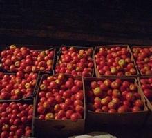 Помидоры на томат - Эко-продукты, фрукты, овощи в Кореновске