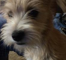 Пропала собака - Собаки в Краснодарском Крае
