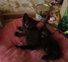 Котята -близнецы  в  заботливые  руки - Кошки в Краснодарском Крае