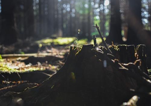 Деревьев на 6 млн срубили двое мужчин в Белореченском районе