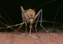 В Кропоткине провели обработку территорий от комаров, фото — «Рекламы Кропоткина»