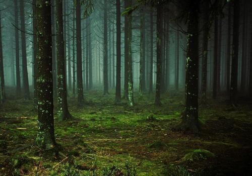 Семья из Волгограда заблудилась в белореченских лесах