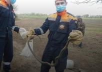 Из подвала частного дома в Крымском районе спасатели вынули больше десятка змей ФОТО, фото — «Рекламы Крымска»