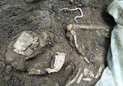 На Кубани мужчина на своем участке нашел останки человека и наконечники копья