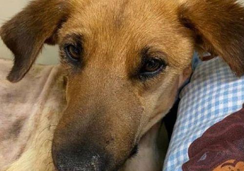 В Геленджике завели дело на человека, который выстрелил в голову дворовой собаке Николь